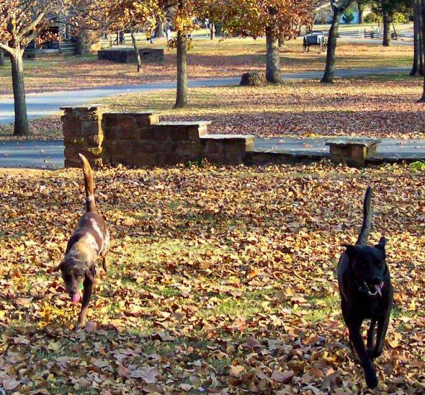 """Battlefield Detectives"" Bonnie & Clyde, patroling the grounds, to insure that no rampaging squirrels, disturb historic artifacts, while attempting to bury acorns !"